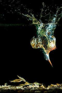 IJsvogel duikt naar vis onder water van Jeroen Stel