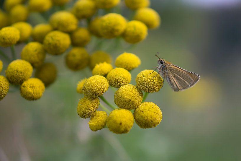 Vlinder op bloem van Juliën van de Hoef