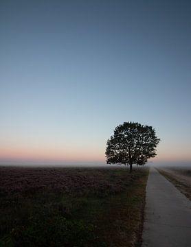 Eenzame boom van Manon Zandt