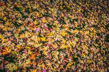 Herfstbladeren van Freddy Hoevers