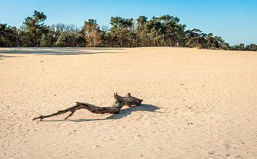 Uitgedroogde boomstam op zandvlakte van Ruud Morijn
