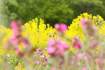 Wildblumenwiese von Ostfriesenfotografie