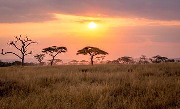 Zonsondergang in de Serengeti van Julian Buijzen