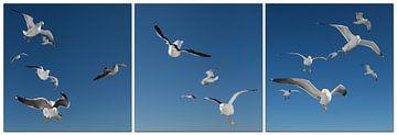 Dance of Seagulls van Hans Kool