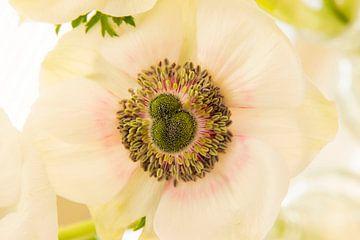 Blume Natur grün. von Sanne Van der avoird