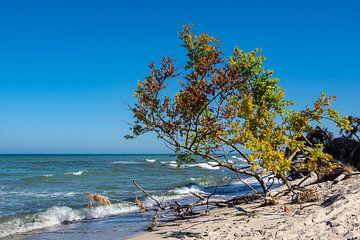 Trees on shore of the Baltic Sea van