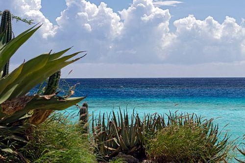 zee zicht aruba