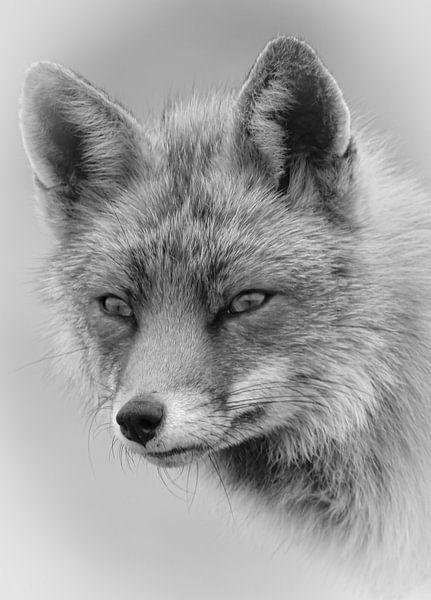 Porträt eines Fuchses in Schwarzweiß von Marjolein van Middelkoop