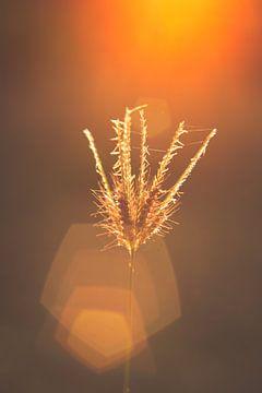 Grass in Sunlight van MR OPPX