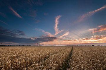 Zonsondergang boven het Graanveld sur Martijn van der Nat