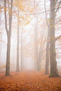 Nebel im Wald von Coby Bergsma