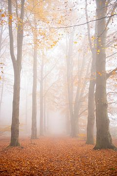 Mist in het bos van Coby Bergsma