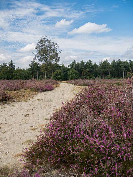 De  heide van de Maashorst in bloei van Moniek van Rijbroek