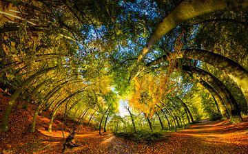 360view in herfstbos van Marcel van Kan