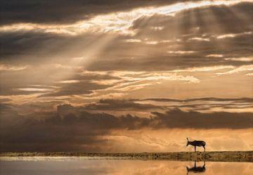 Sonnenuntergang mit Spiegelwasser  von Marcel van Balken