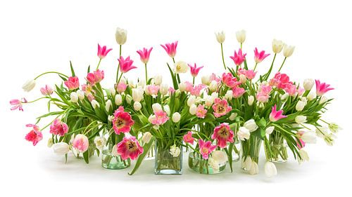 Tulipes Nature morte 20201
