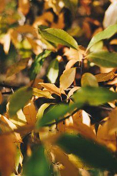 Grüne und gelbe Herbstblätter am Baum von AIM52 Shop
