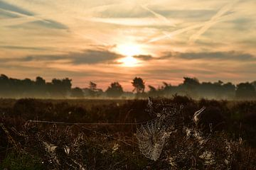 Mist en dauw boven de heide bij de opkomende zon van Renzo de Jonge