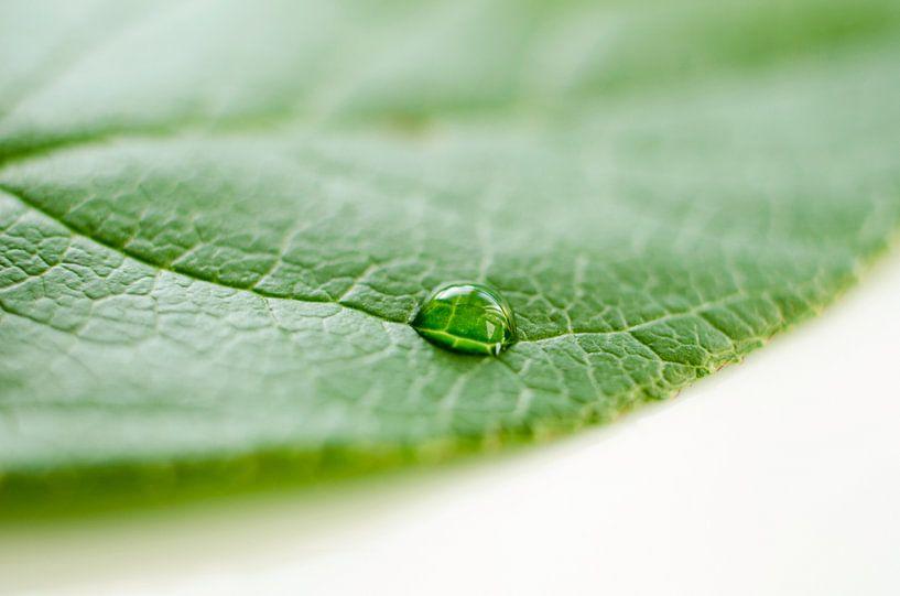 Groen blad met waterdruppel van Ricardo Bouman