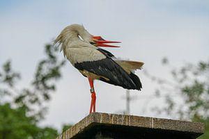 Vogels | Ooievaar van Larissa Bakker