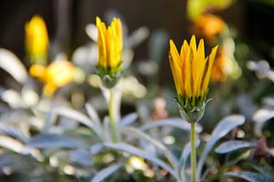 Yellow flowers van Selma Hamzic