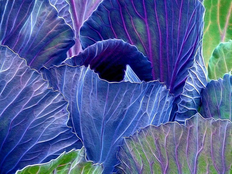 Cabbage (Kool) van Caroline Lichthart