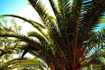 Uitzicht op palmen en groene bomen en bladeren met zonnestralen.