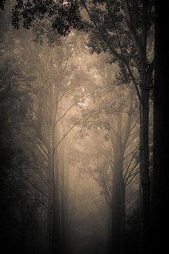 Bäume im Nebel - 2 von Olivier Lachampt