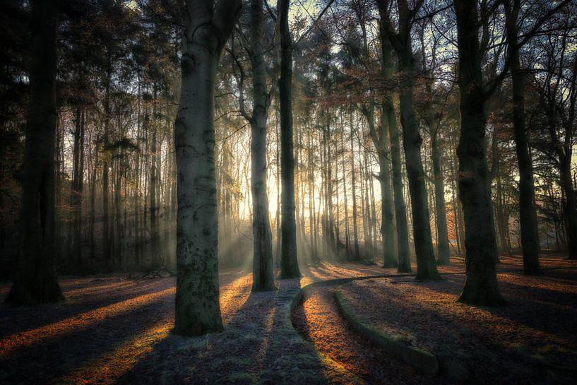Sonnenlicht scheint auf den Resten eines Vergnügungsparks von Pascal Raymond Dorland