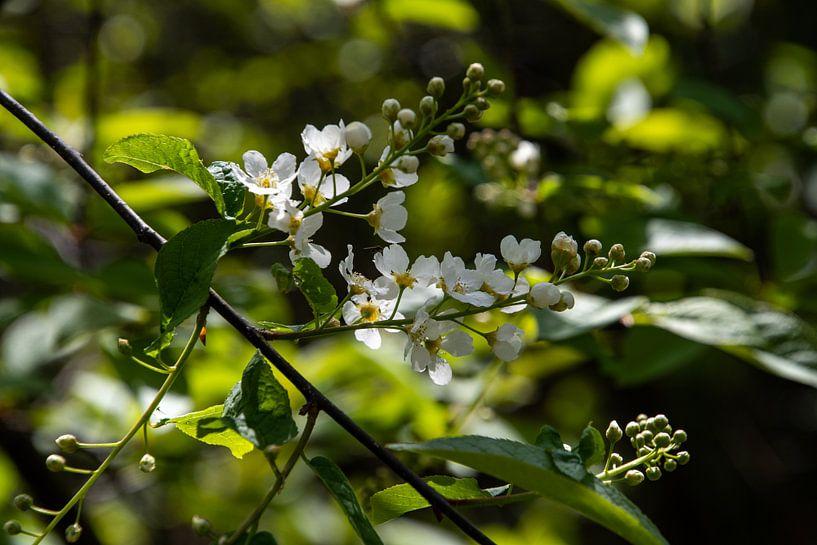 Weiße Blüte von Ingrid Aanen