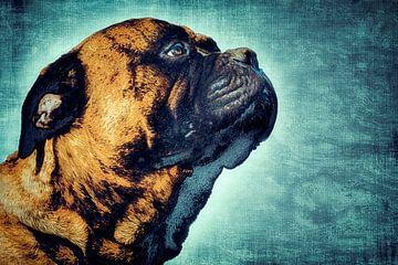 Lief en stoere hond van Nannie van der Wal