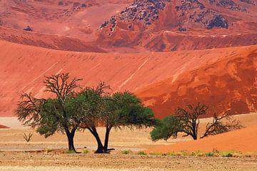 sossusvlei desert with trees van Bernd Hoyen