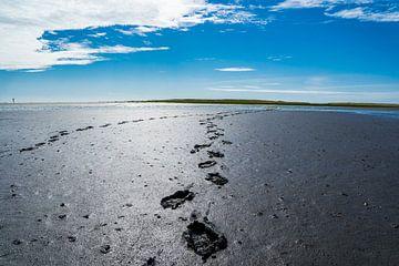 Voetsporen in het wad bij de Noordzee van Animaflora PicsStock