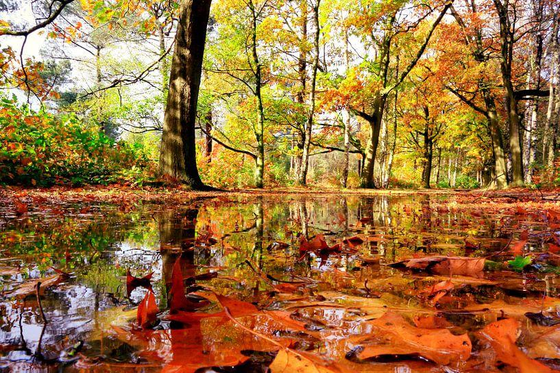 wet autumn van Els Fonteine