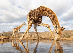 Grote dorst van Peter van Dam