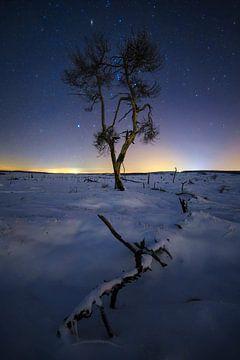De verbrande boom. sur Sven Broeckx