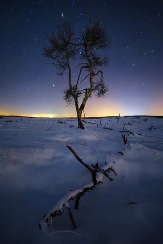 De verbrande boom. van
