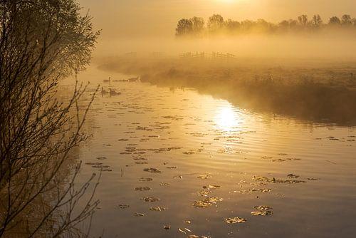 Sfeervolle, gouden zonsopkomst met mist in de Alblasserwaard