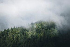 Mistig en mysterieus dennenbos in het Zwarte Woud van