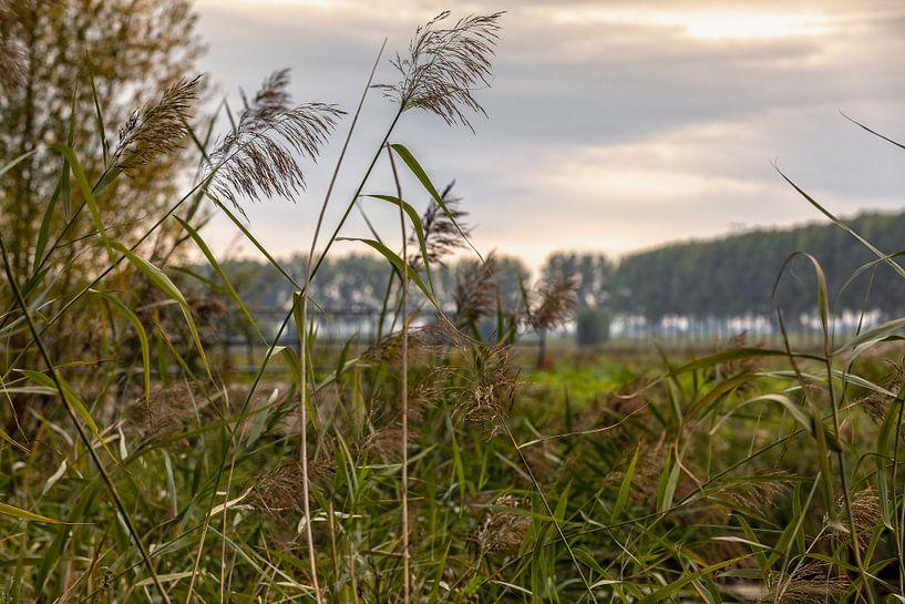 Dordtse Biesbosch Herfst van Rob van der Teen