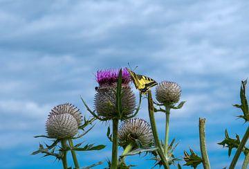 Schmetterling von Florian Kampes