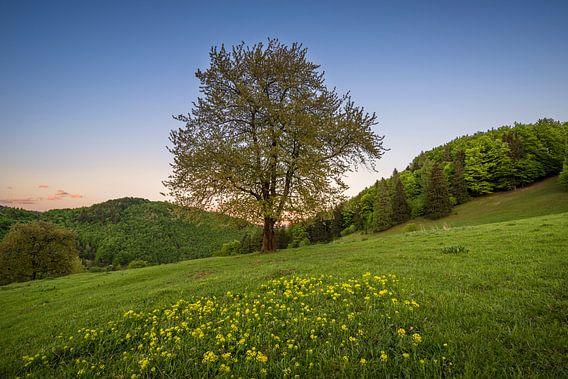 Sunset Tree 1
