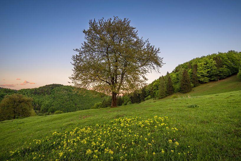 Sunset Tree 1 van Peter Oslanec