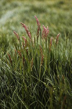 Niederländisches Gras polletje von Holly Klein Oonk