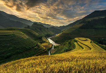 RiceTerrace (Vietnam), Sarawut intarob van 1x