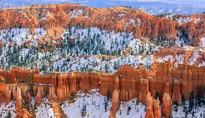 Winter in Bryce Canyon National Park, Utah.