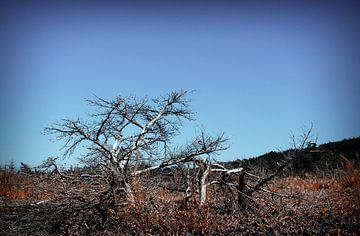 Verbrande boom van Jasper H