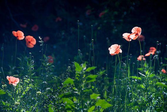 Flowers mist van  Mariska Hofman