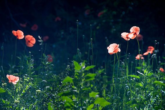 Flowers mist von Mariska Hofman