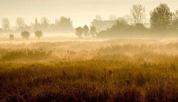 Gouden mist van Andy Moss